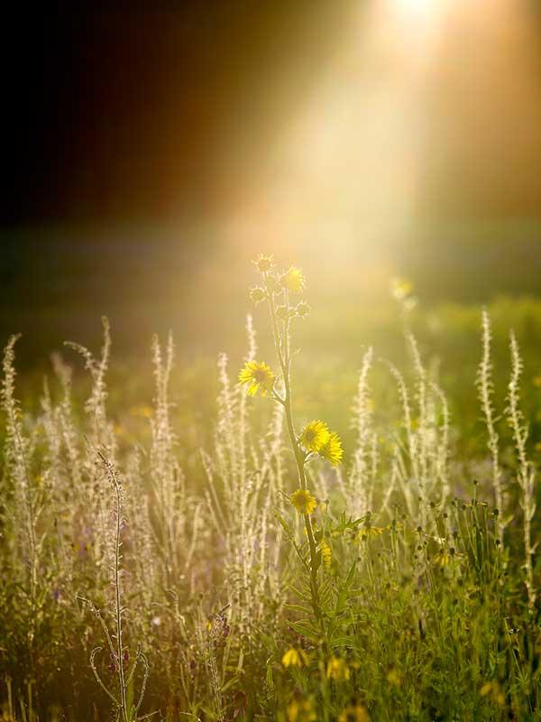 Landscapes-Nordlof-Light-Spr14