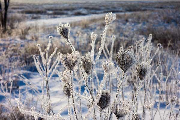"""Winter Gems,"" Photography by Brad Nordlof."