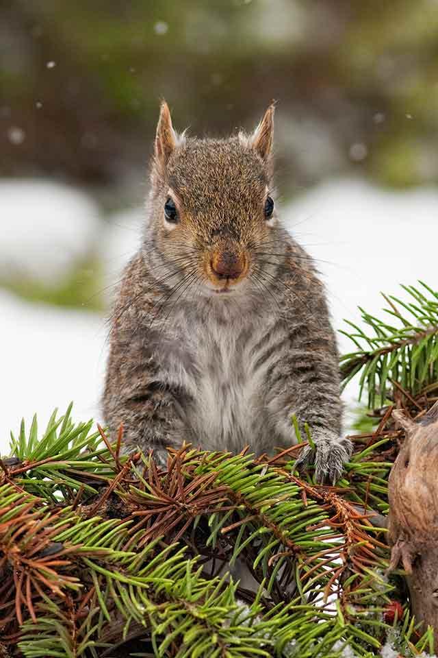 Landscape-Squirrel-David-C-Olson-H15