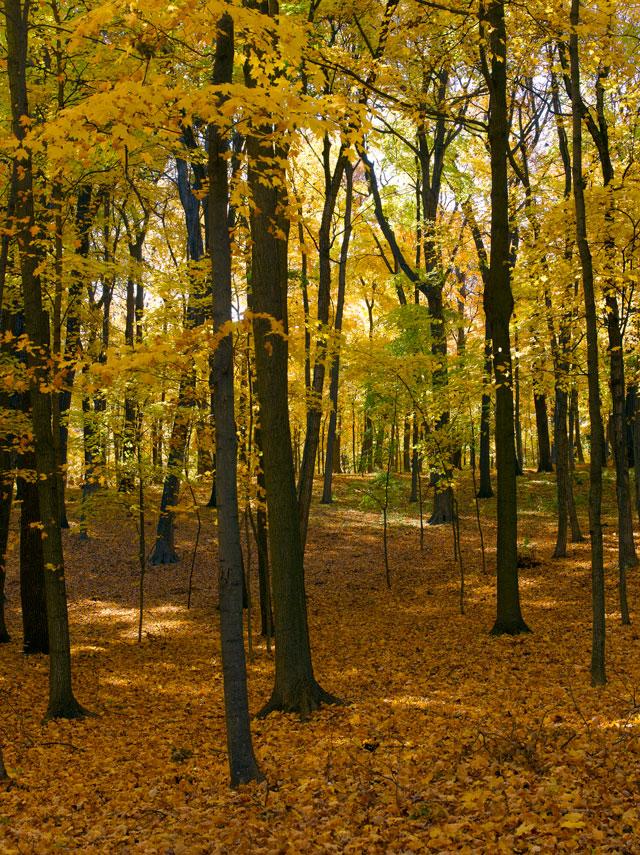 Landscape-Fall-AG16