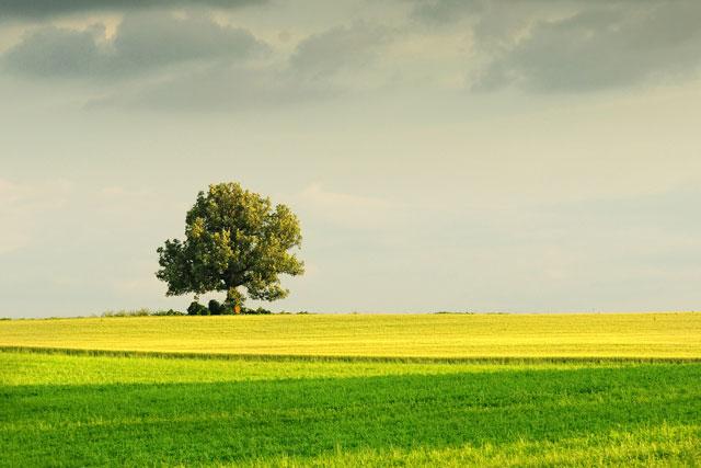Landscapes-Summer-AG16