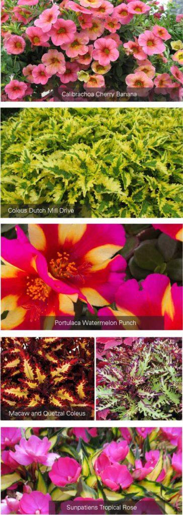 Home-Flowers2-Spr17