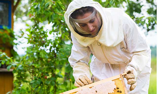Bring your bee suit and learn about beekeeping techniques at Byron Forest Preserve on July 9 and Aug. 13.