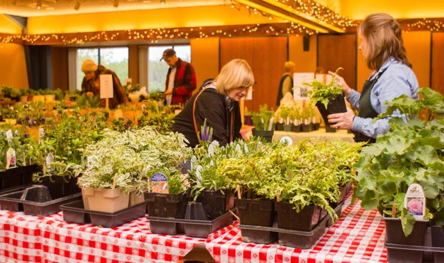 Stock up on native plants during the spring sale at Klehm Arboretum & Botanic Garden, in Rockford, on May 11.