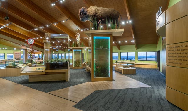 A 6-foot-tall taxidermy bull bison towers over the recently renovated museum at Jarrett Prairie Center, in Byron, Ill.