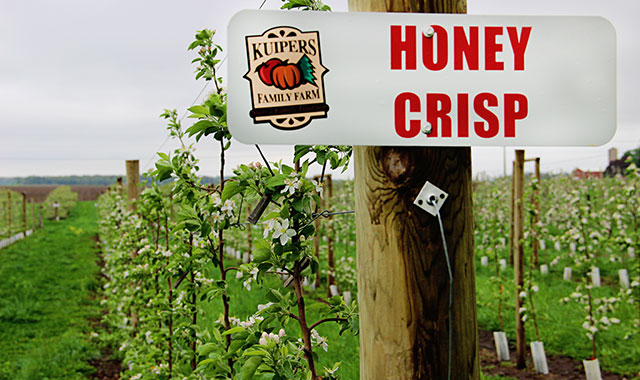 Picking apples at Kuipers Family Farm is unlike any other experience in the area. This orchard has an attentive staff that can answer any question you may have about the 160-acre farm and more than 30 apple varieties.